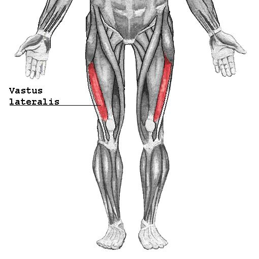 Vastus_lateralis2.png